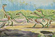Coelophysis Database